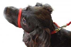 Best dog collar for stopping dogs pulling on the lead