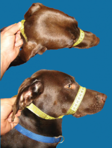 K9 Bridle Fitting Instructions