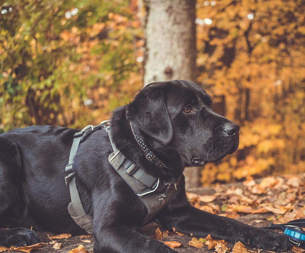 Best dog headcollar