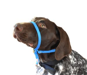Best dog headcollar